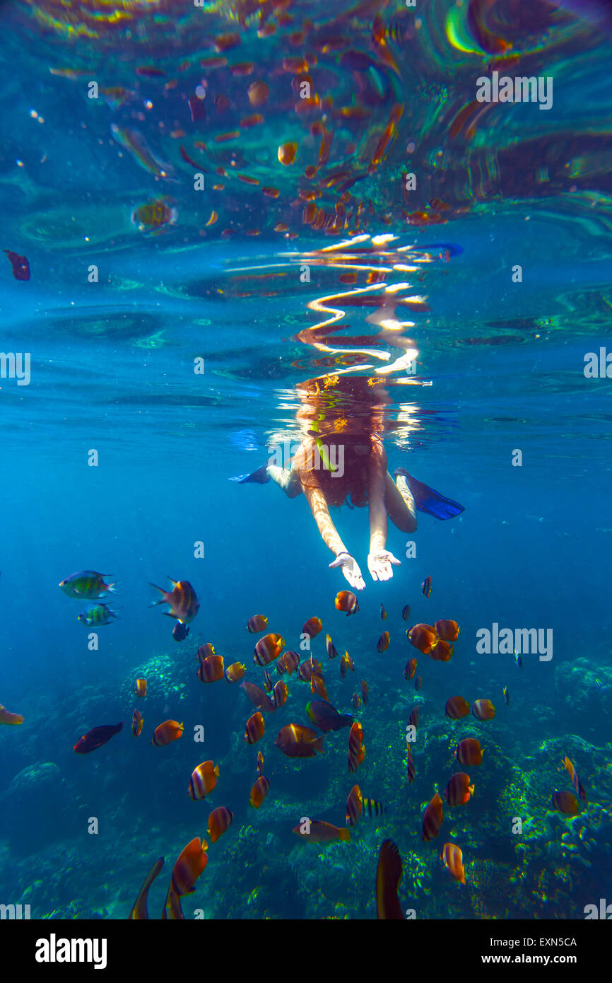 Indonesia, Bali, young woman snorkeling with fish - Stock Image