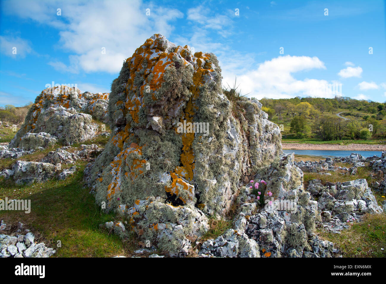 Volcanic rock and Lichen - Stock Image