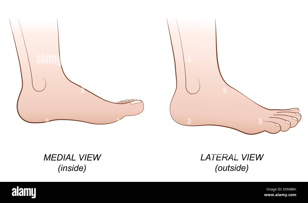 Feet - medial view (inside) and lateral view (outside). - Stock Image