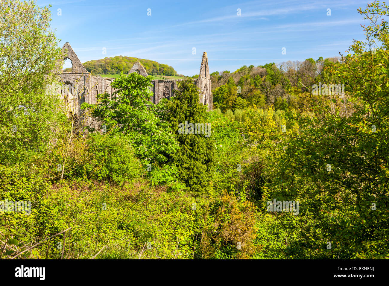 The ruins of Tintern Abbey a medieval Cistercian monastery, Monmouthshire, Wales, United Kingdom, Europe. Stock Photo