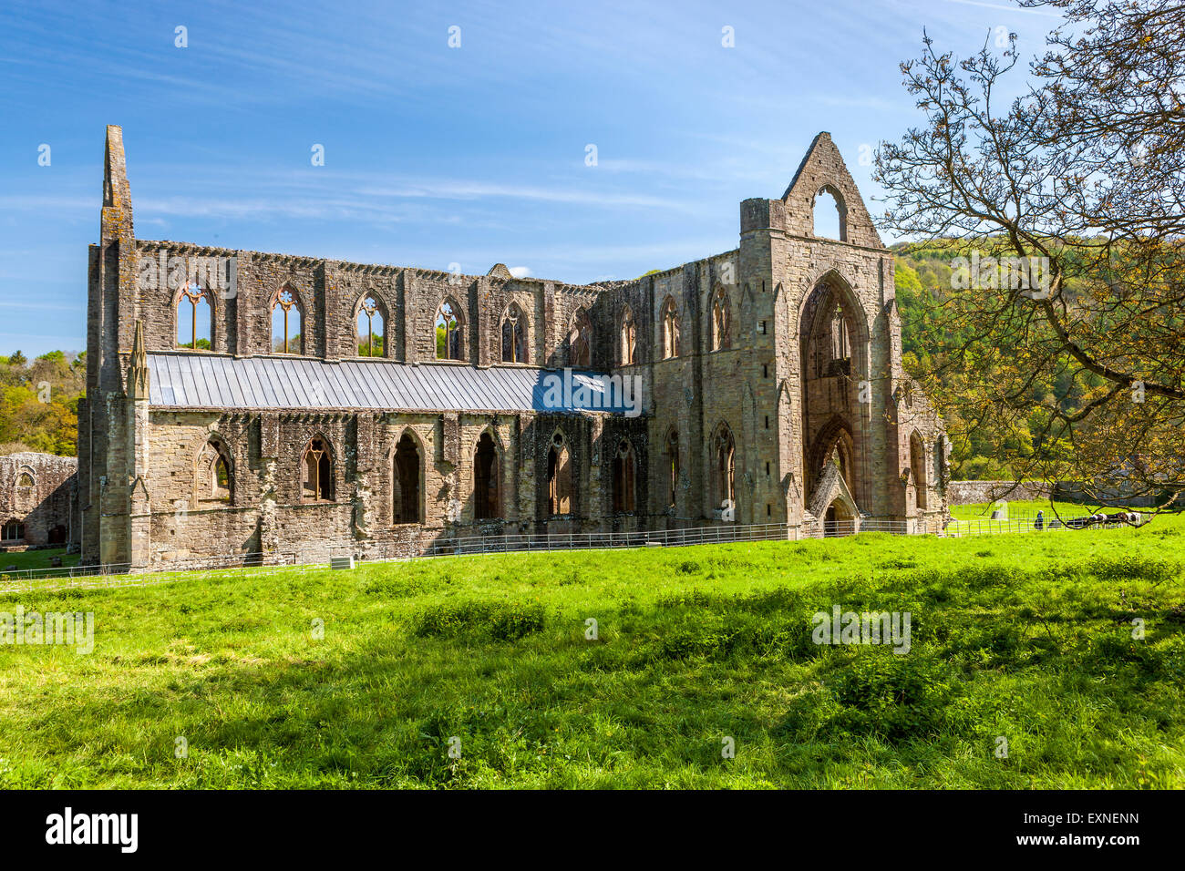 The ruins of Tintern Abbey a medieval Cistercian monastery, Monmouthshire, Wales, United Kingdom, Europe. - Stock Image