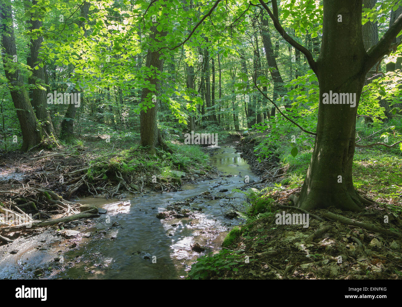 Creek in the forest of Little Carpathian - Slovakia - Stock Image