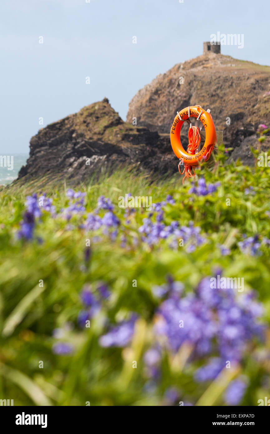 Bluebells, cliffs and tower at Abereiddy, Pembrokeshire Coast National Park, Wales in May - Stock Image