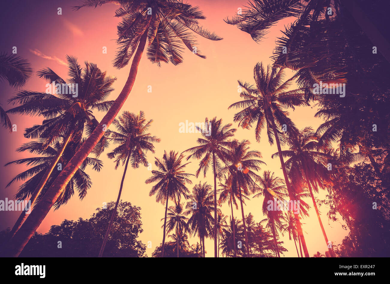 Vintage toned holiday background made of palm tree silhouettes at sunset. - Stock Image