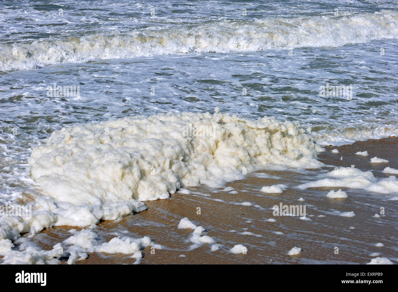 Spume / sea foam / ocean foam / beach foam formed during stormy conditions and following an algal bloom (Phaeocystis) - Stock Image