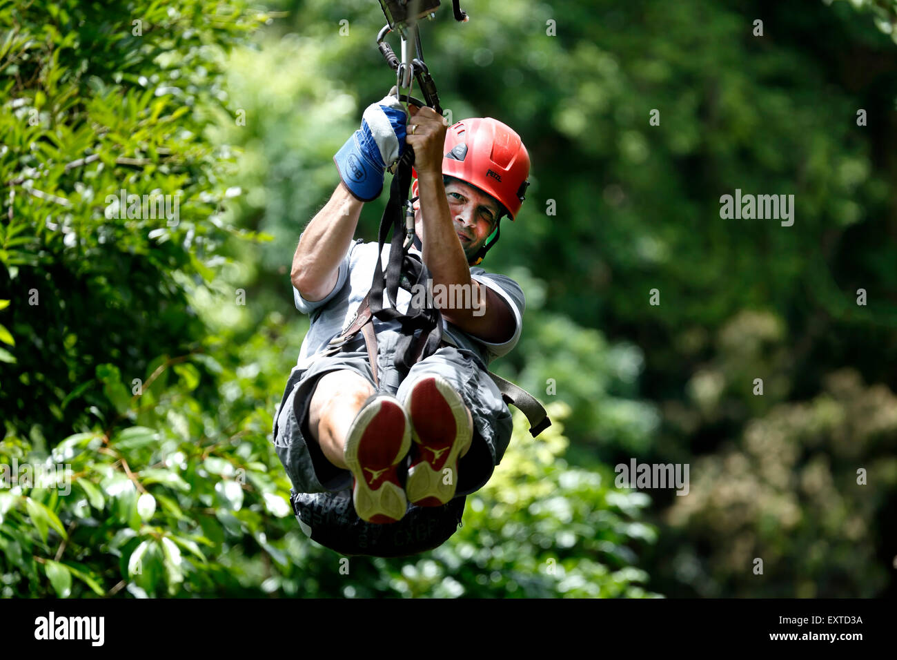Man on zip line, Ecoquest Adventures & Tours, Hacienda Campo Rico, Carolina, Puerto Rico - Stock Image