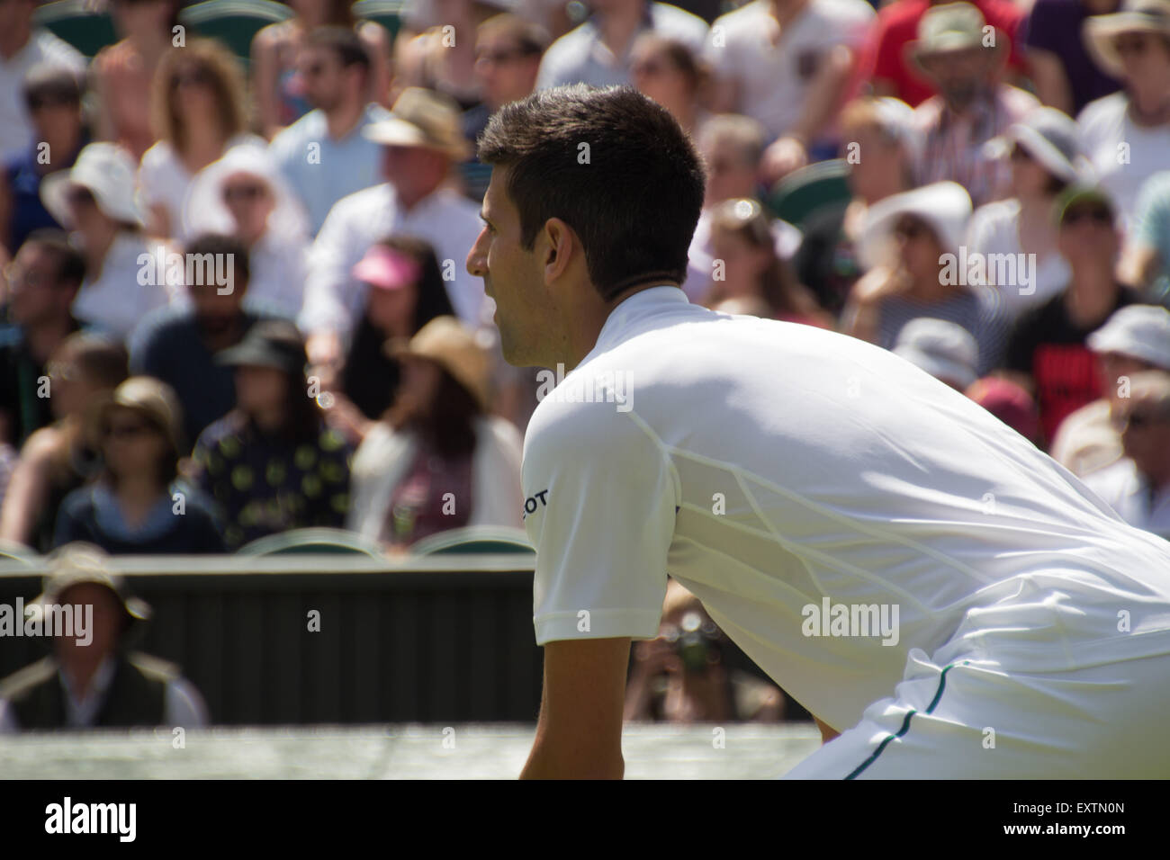 Novak Djokovic, Centre Court, Wimbledon 2015 on day 1 - Stock Image
