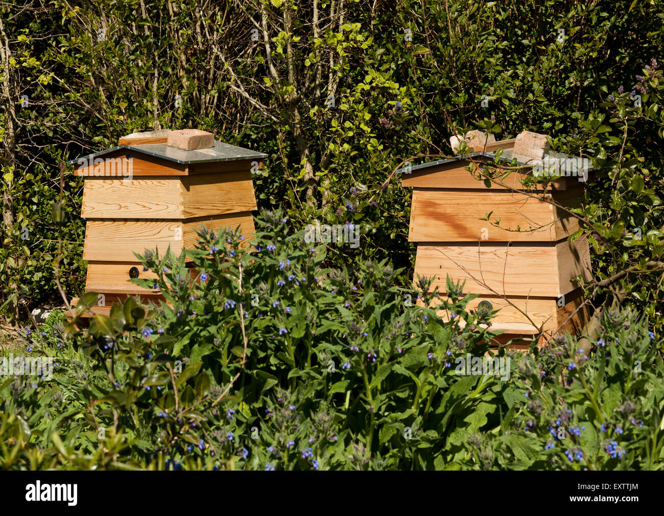 Two bee hives in a garden in spring - Stock Image