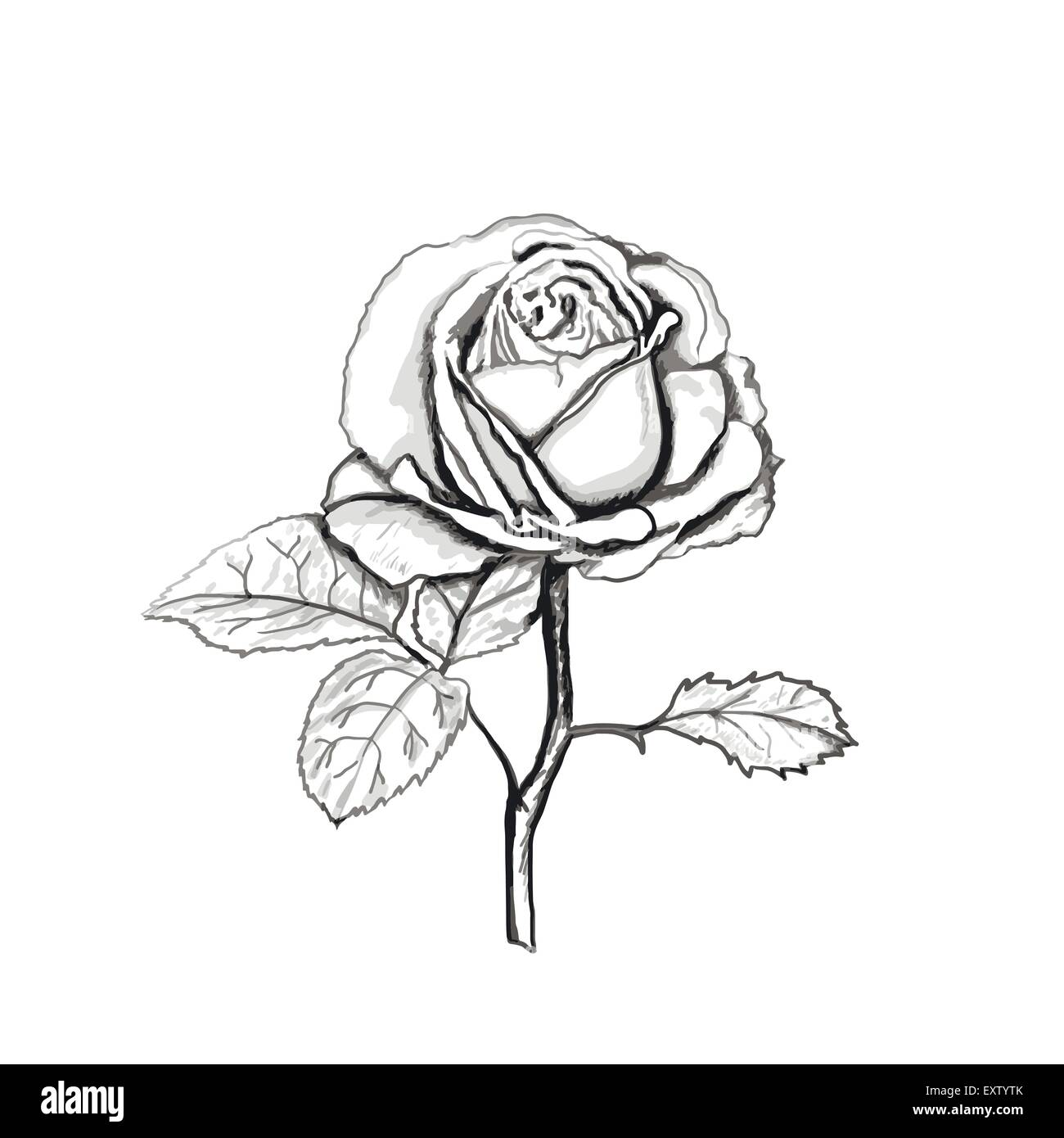 The Rose And Thorn Stock Vector Images Alamy Flower Line Diagram Simple Drawing Of Bud Sketch