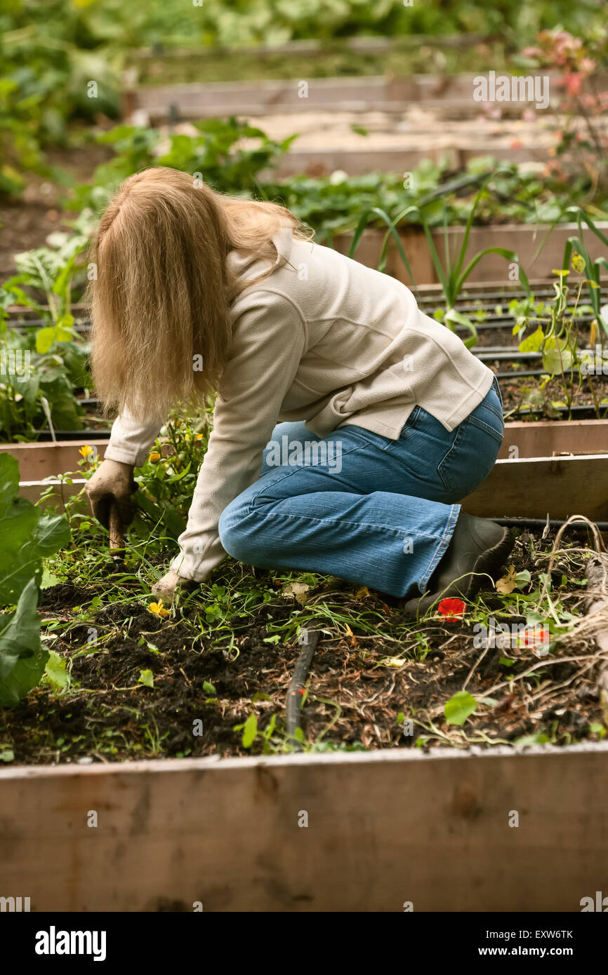 Unwanted Garden Plants Stock Photos & Unwanted Garden Plants Stock ...