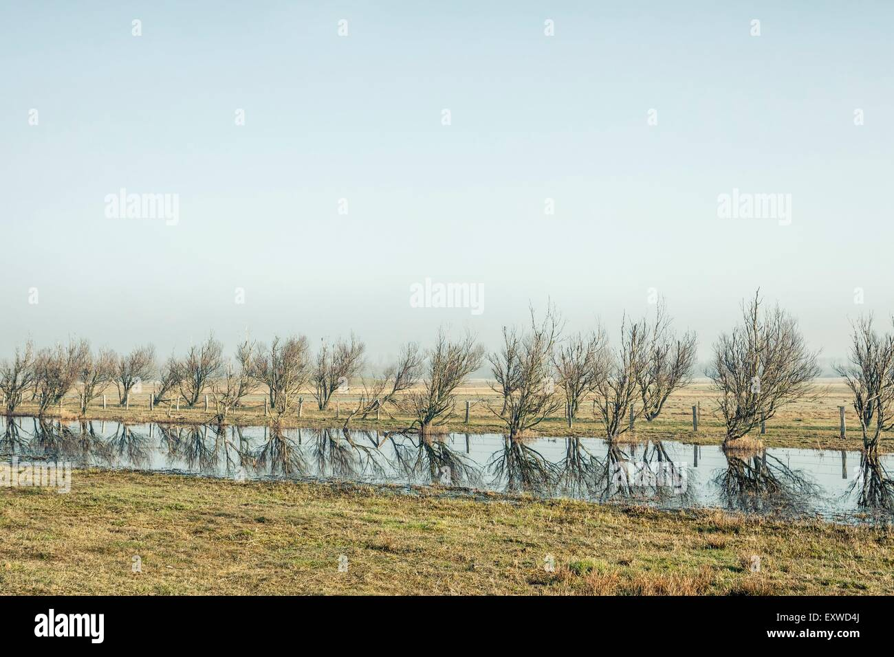 Landscape at Katinger Watt, Schleswig-Holstein, Germany - Stock Image