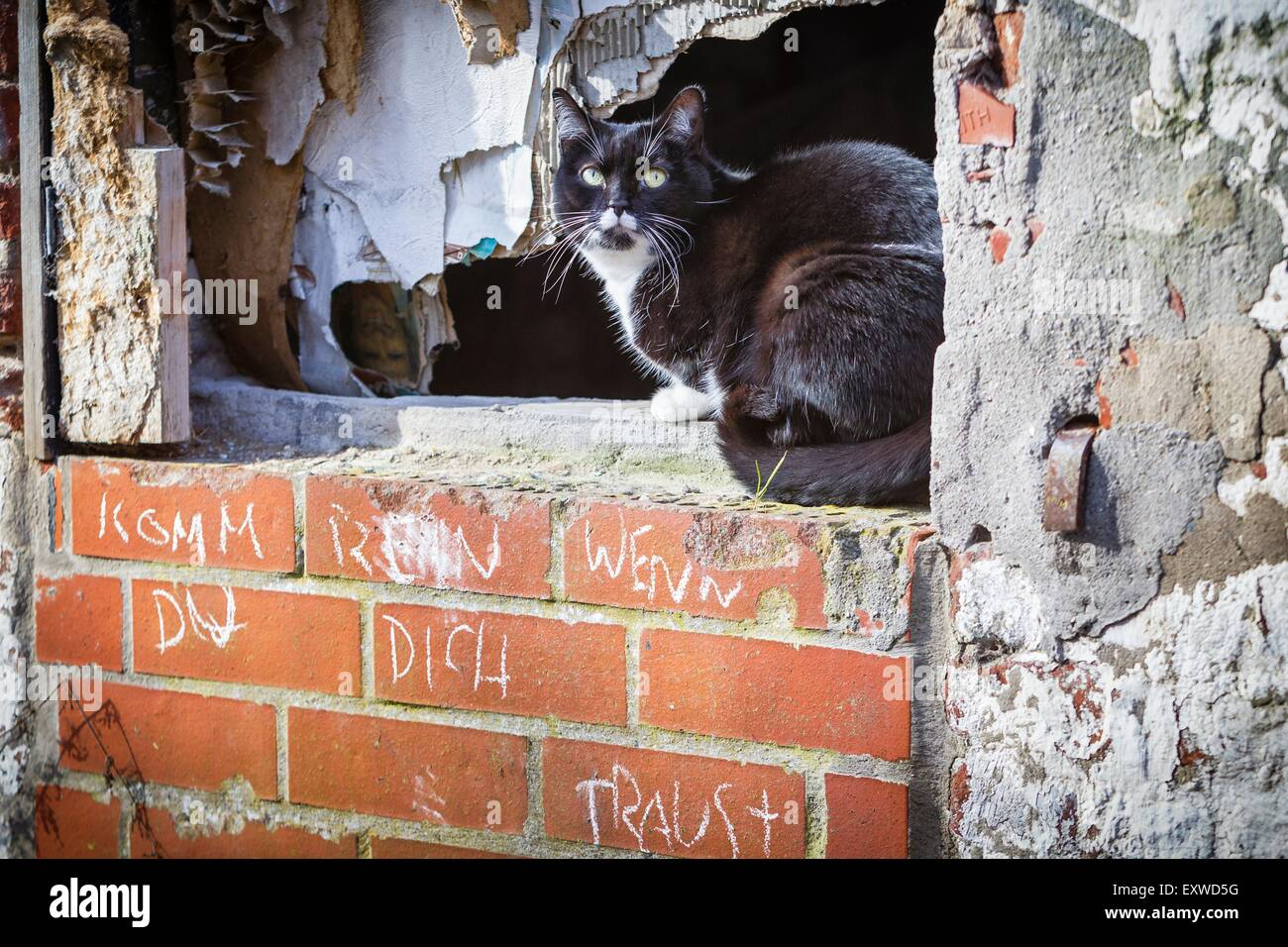 Cat in windowsill of a ramshackle house Stock Photo