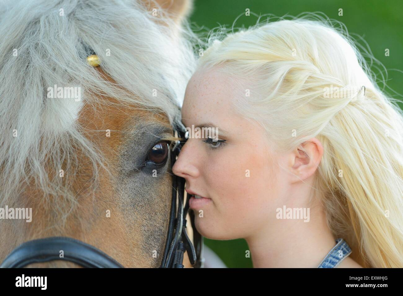 Young woman with a haflinger horse, Upper Palatinate, Bavaria, Germany, Europe - Stock Image