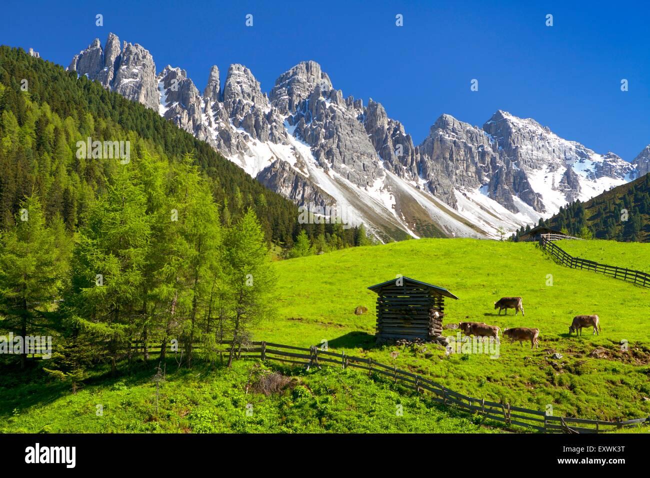 Alpine pasture at Kalkkoegel, Tyrol, Austria Stock Photo