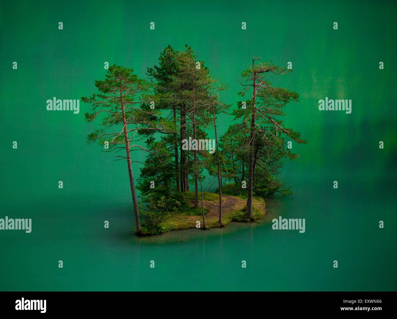 Pine trees in Fernsteinsee, Nassereith, Tyrol, Austria - Stock Image