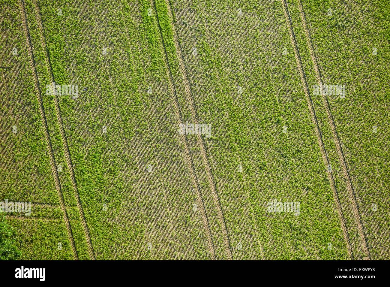 Tyre tracks in field, Baden-Wuerttemberg, Germany, aerial photo - Stock Image