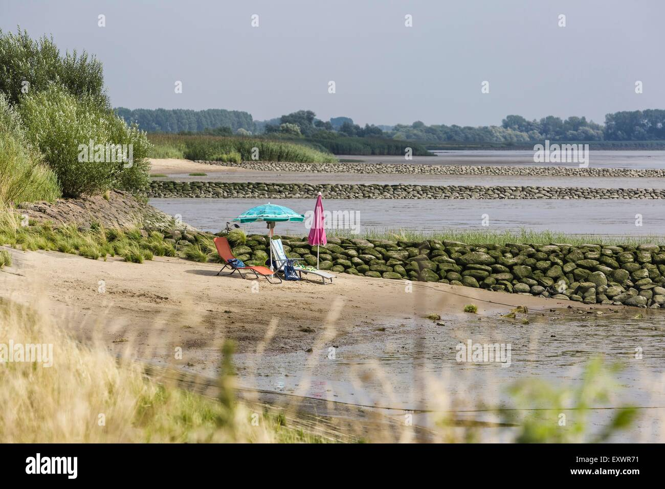 Lounger and two sunshades at riverbank, Kollmar, Schleswig-Holstein, Germany, Europe - Stock Image