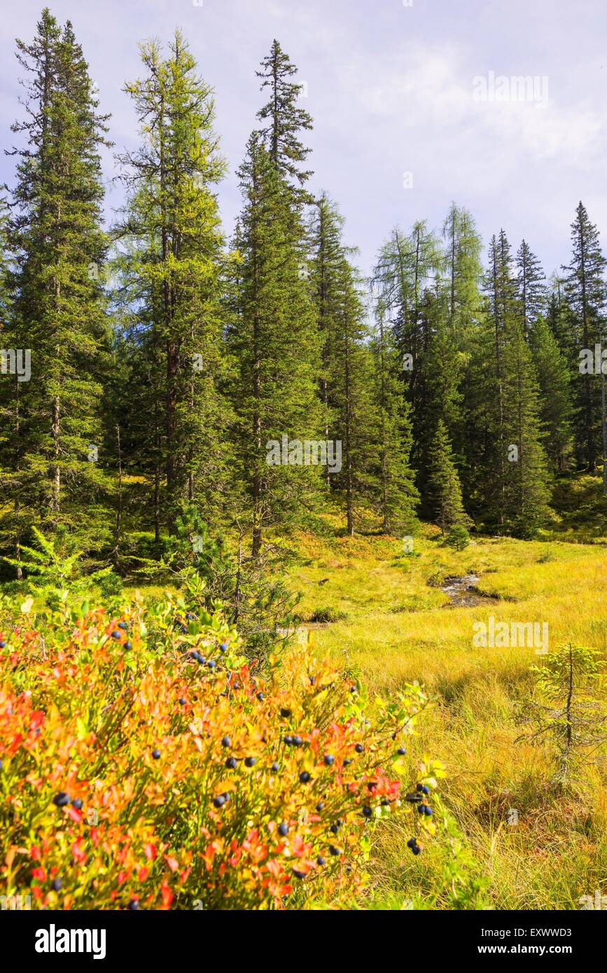 Autumnal idyll at Tauernkar, Pongau, Austria - Stock Image