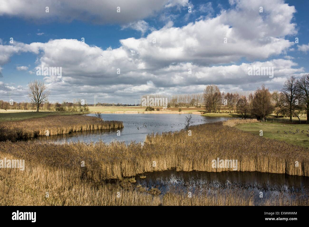 Lake with reeds in Lower Rhine region, Germany - Stock Image