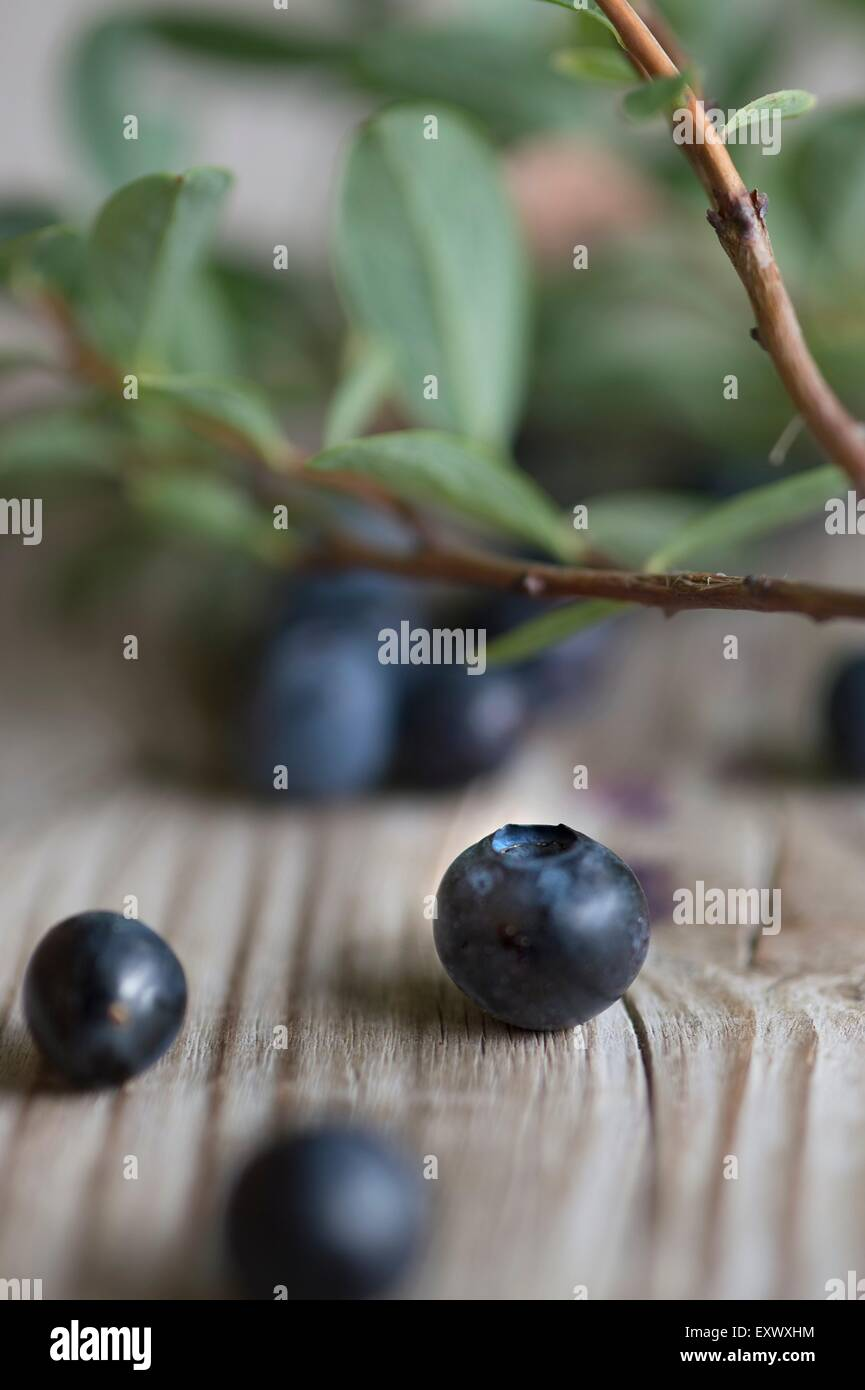 Fresh blueberries with leaves - Stock Image