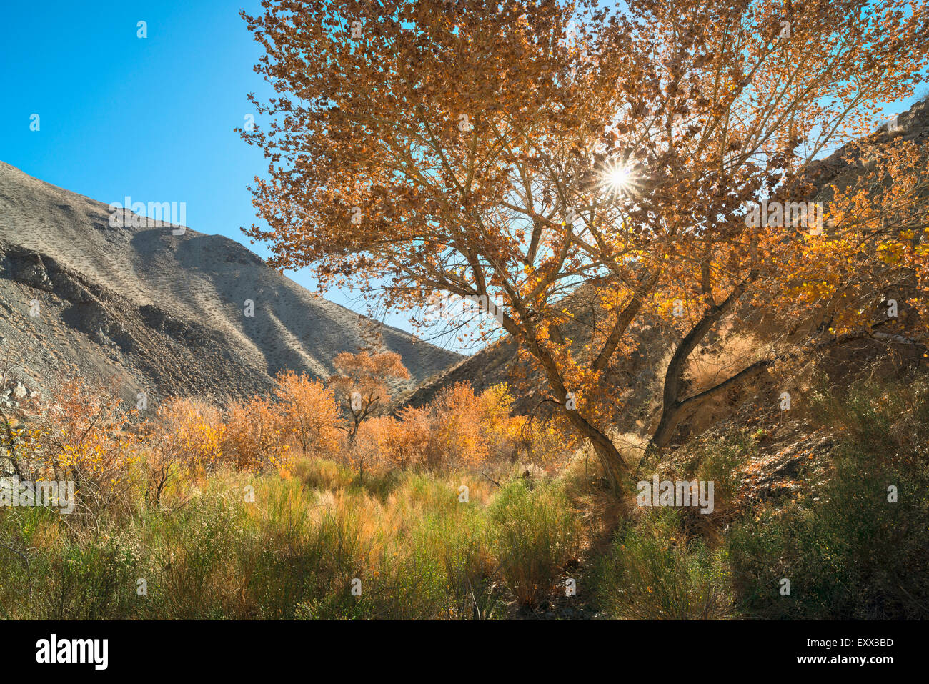 View of Cottonwood Canyon - Stock Image