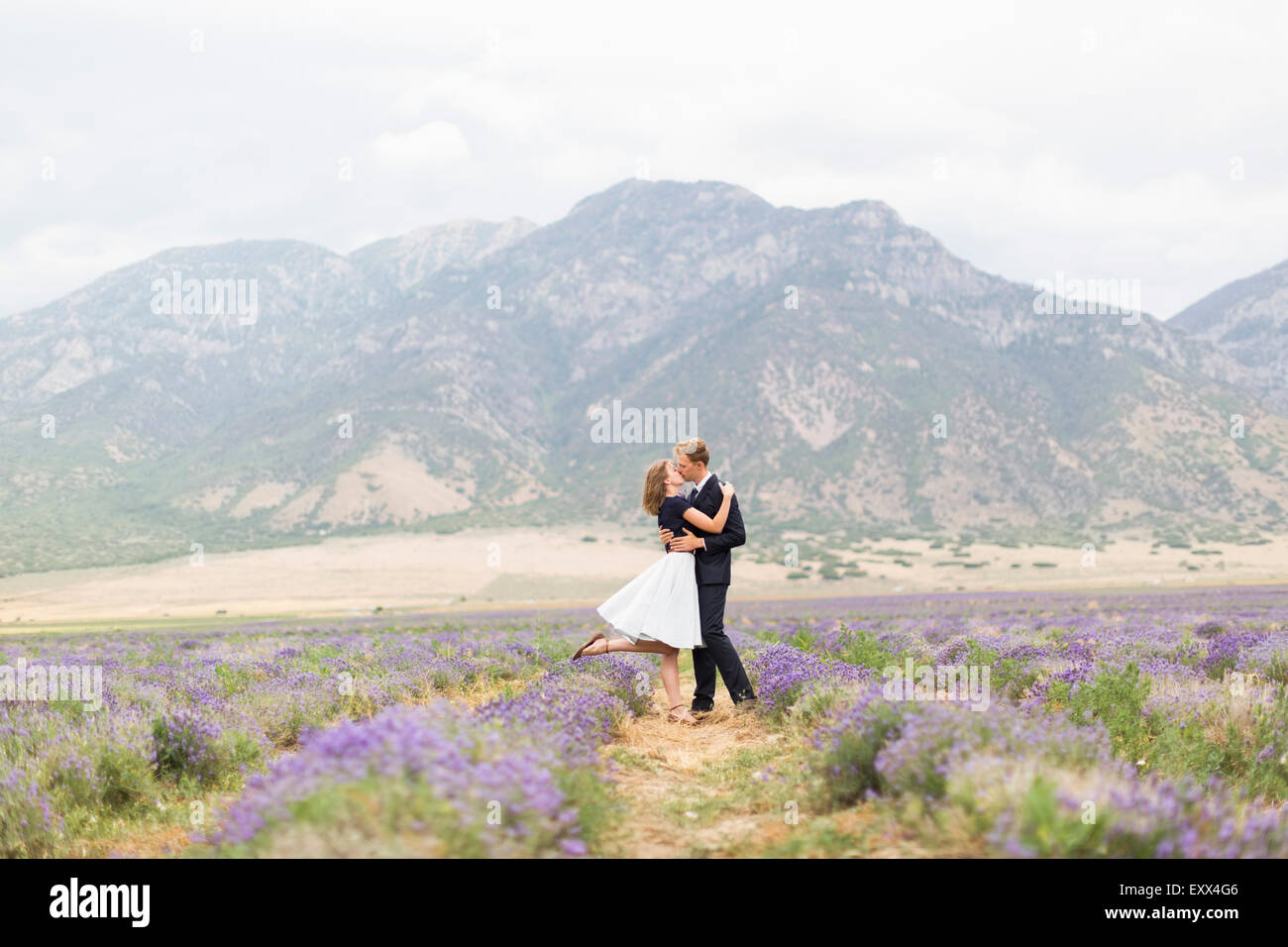 Newlywed couple kissing in lavender field with mountains on background - Stock Image