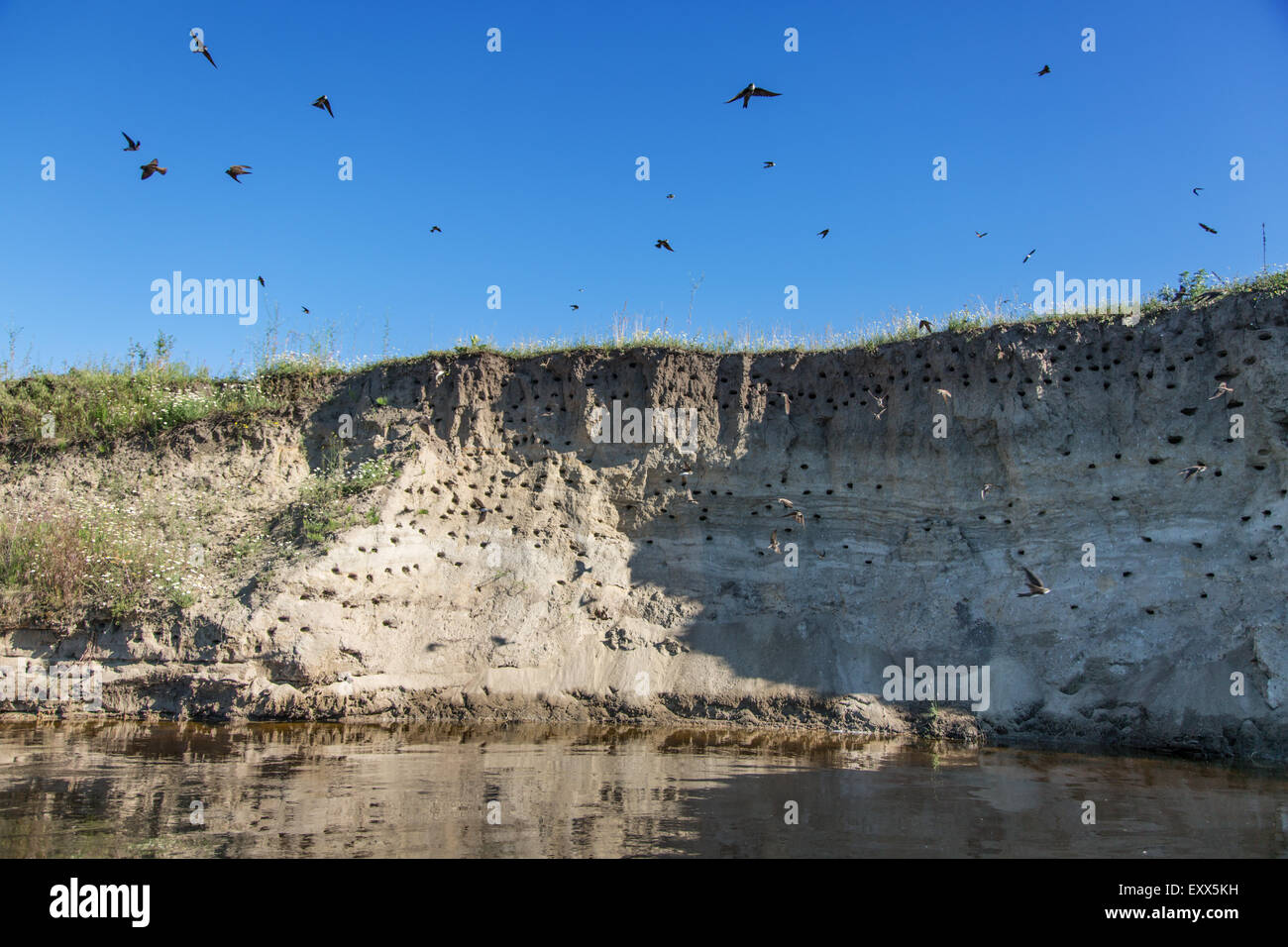 River-bank with breeding grounds of sand martins. - Stock Image