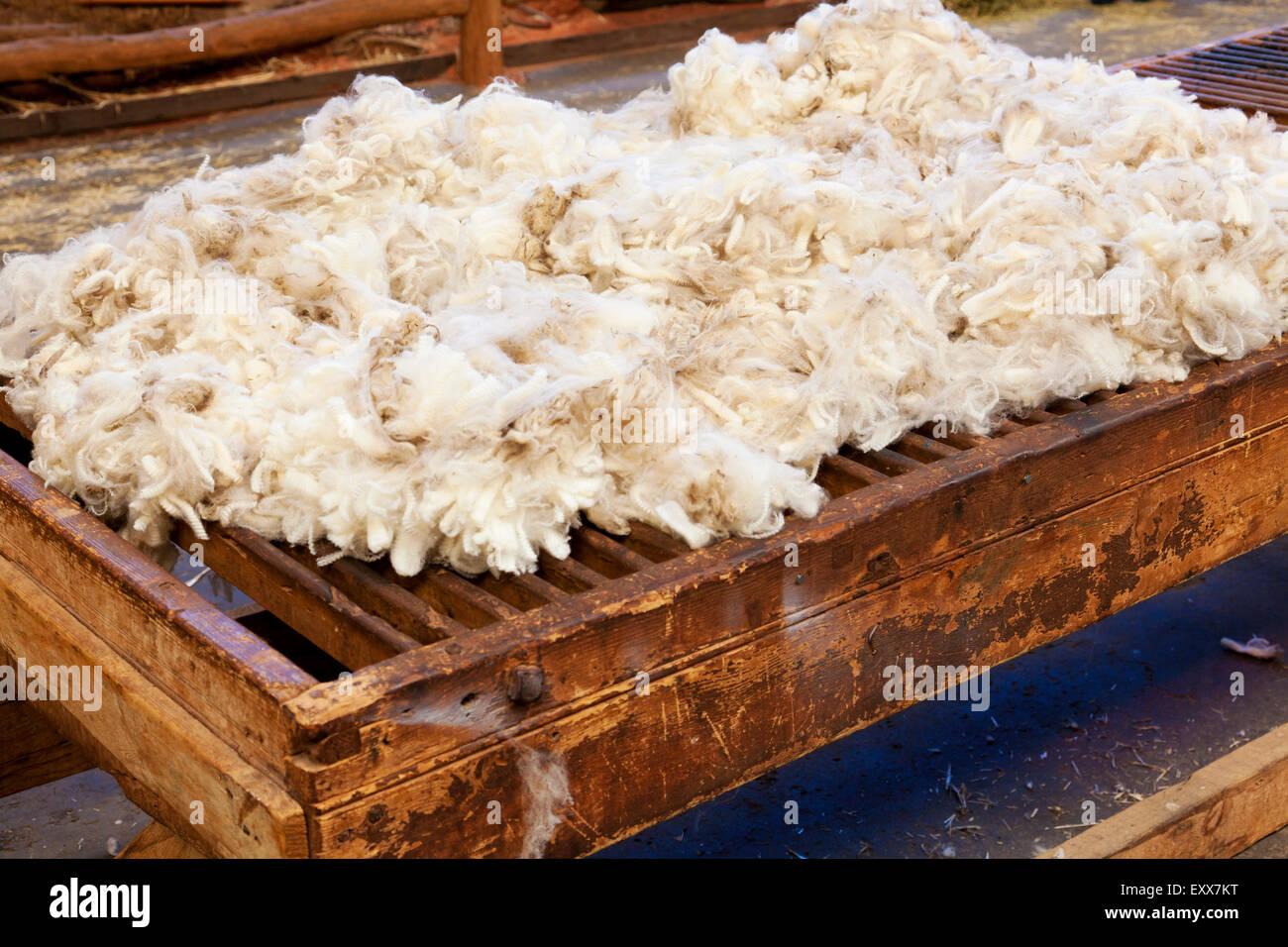 Fresh sheared wool - Stock Image