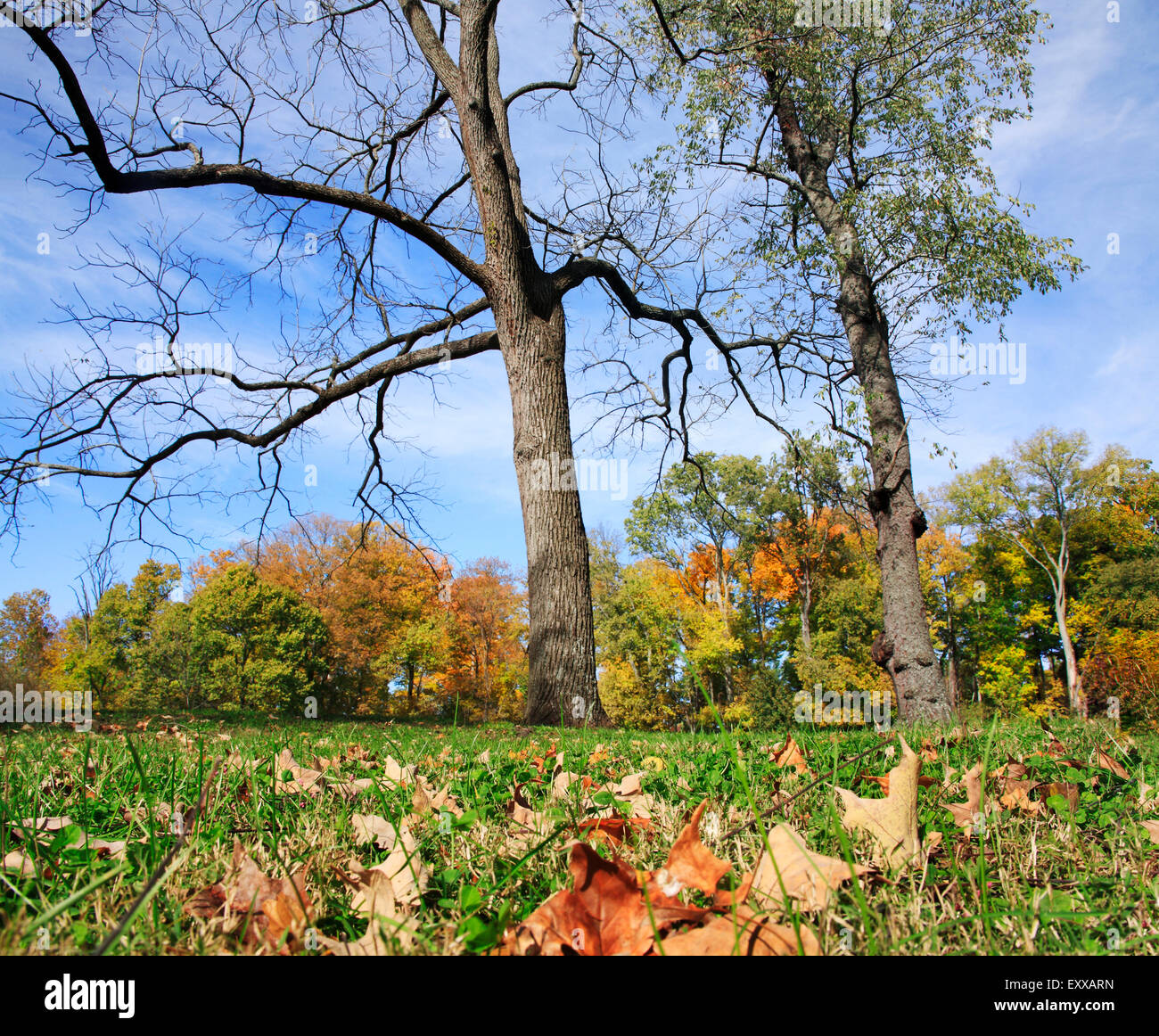 Trees And Fallen Leaves In Autumn, Sharon Woods, Southwestern Ohio, USA - Stock Image
