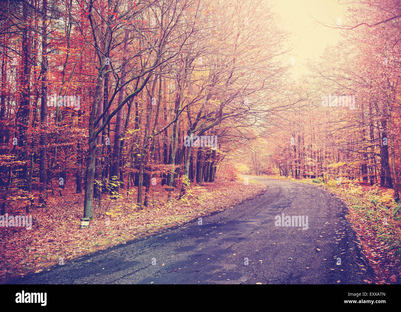 Vintage toned picture of a road in autumnal forest. - Stock Image