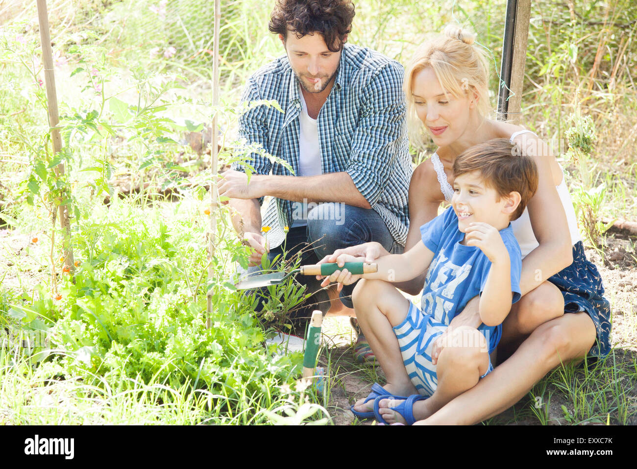 Parents teaching little boy how to garden - Stock Image