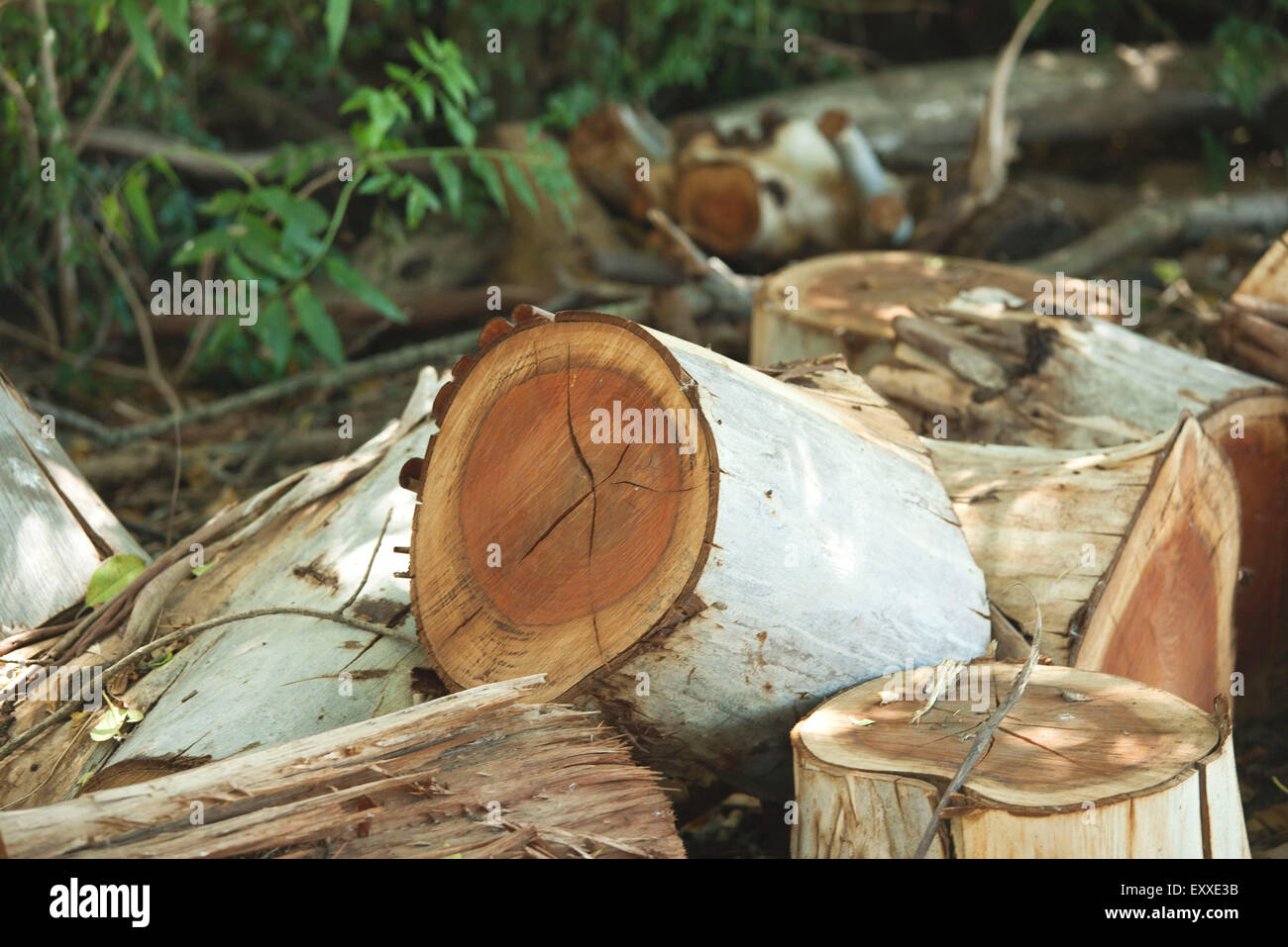 Pile of cut wood Stock Photo