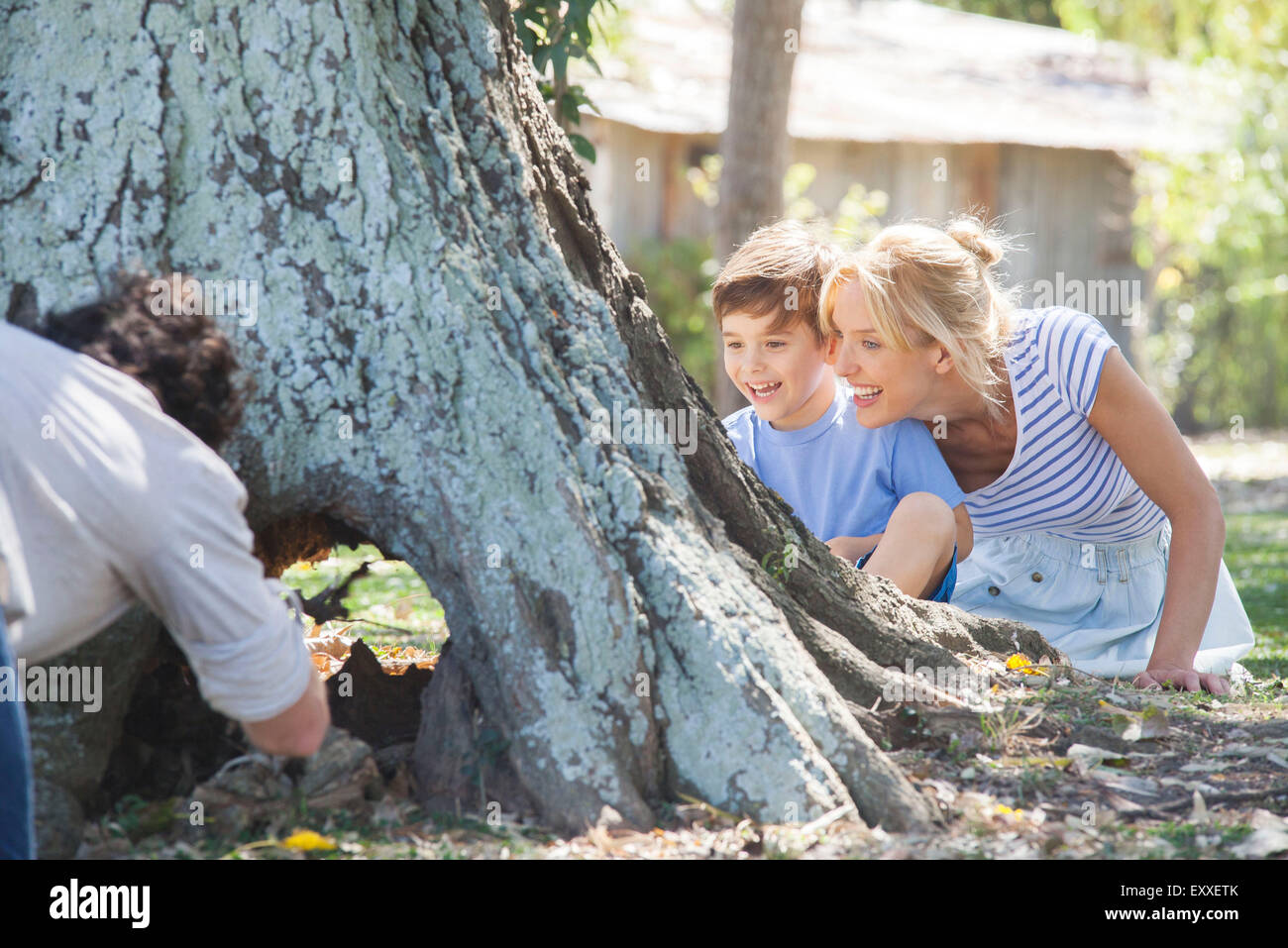 Young family exploring hollowed out tree trunk - Stock Image