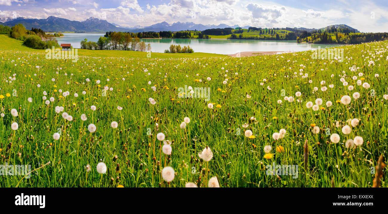 panorama landscape in Bavaria with alps mountains and meadow at spring - Stock Image