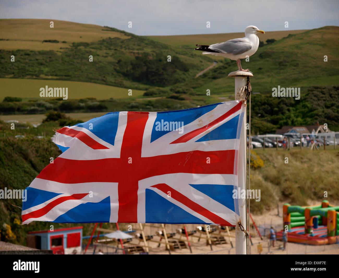 Herring gull on a flagpole flying a Union Jack Flag, Woolacombe, Devon, UK - Stock Image