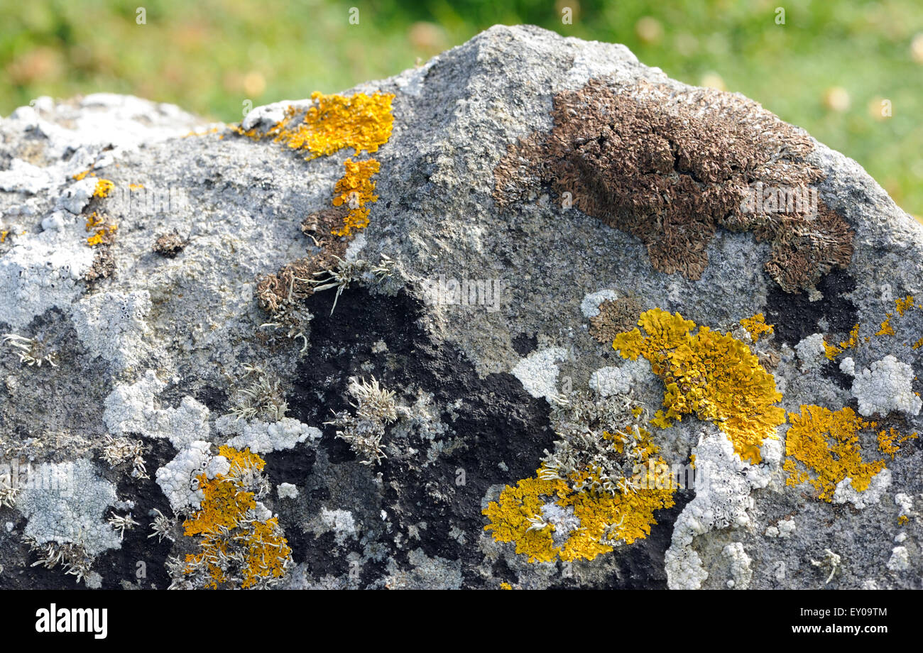 Lichen covered rocks indicate the unpolluted air on St Kilda. . Hirta, St Kilda, Scotland, UK. - Stock Image
