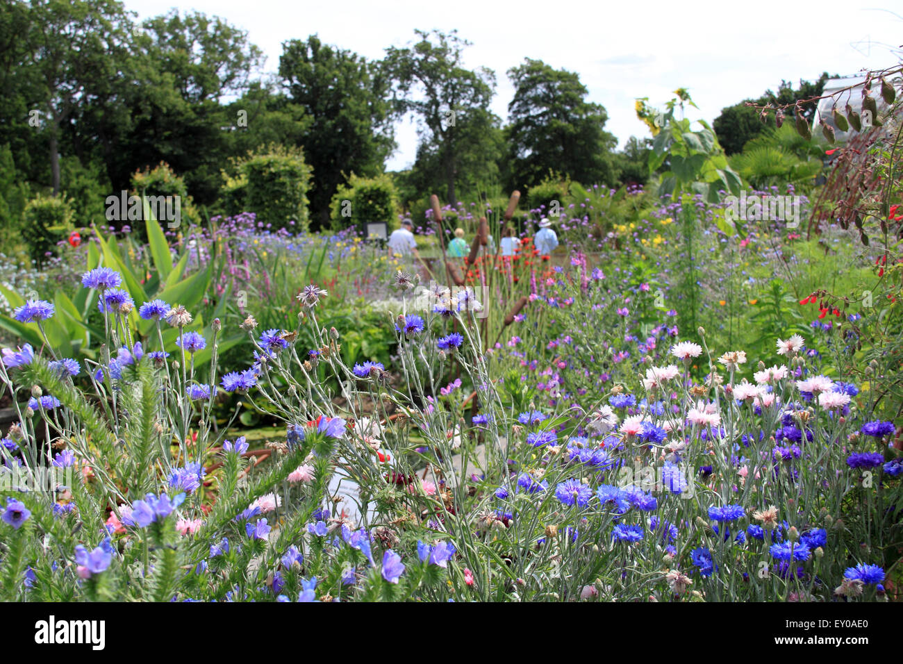 Royal Horticultural Society Arts Fest, RHS Garden Wisley, Woking, Surrey, UK. 18th and 19th July 2015. Two day event Stock Photo