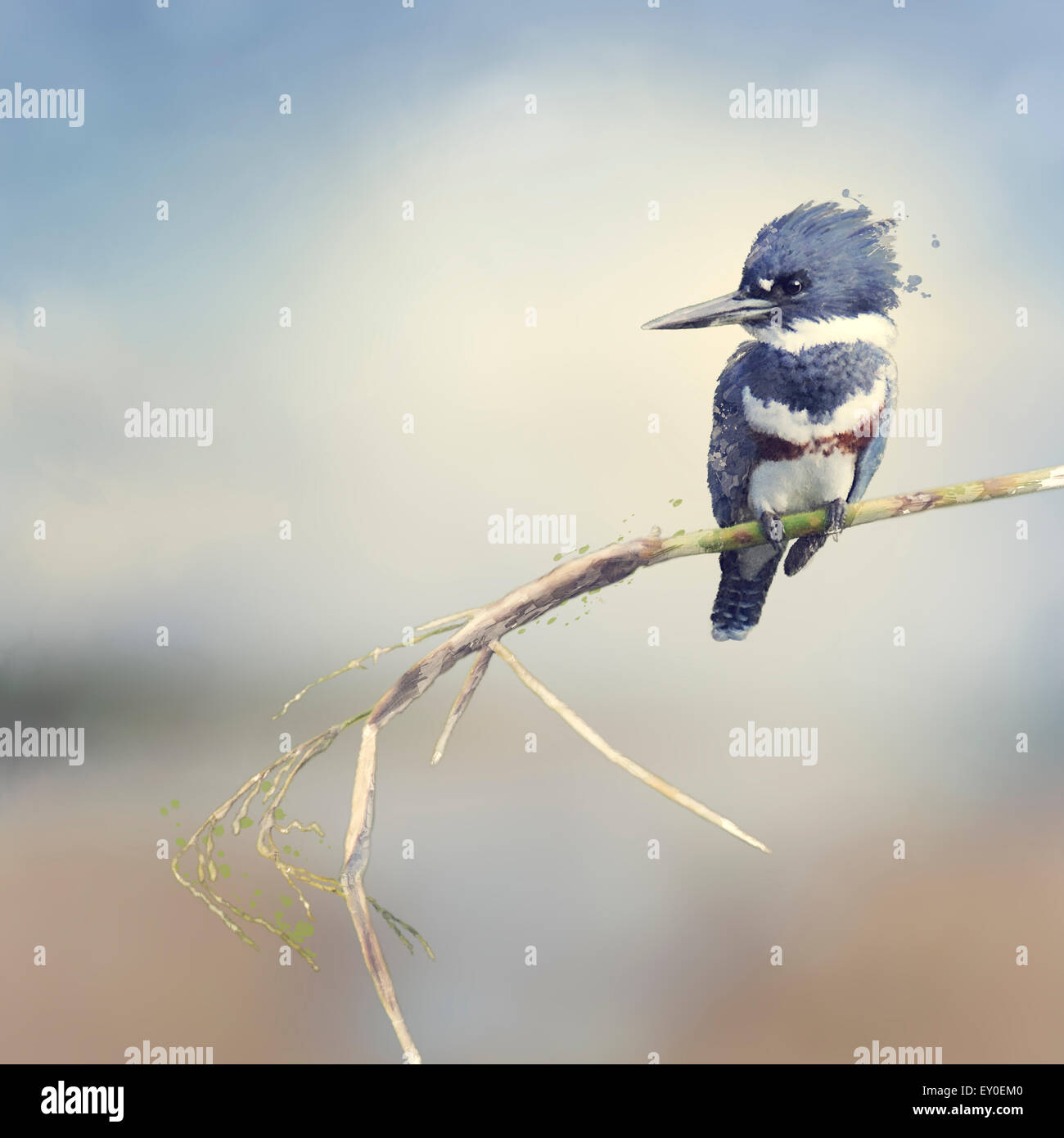 Digital Painting Of Belted Kingfisher - Stock Image