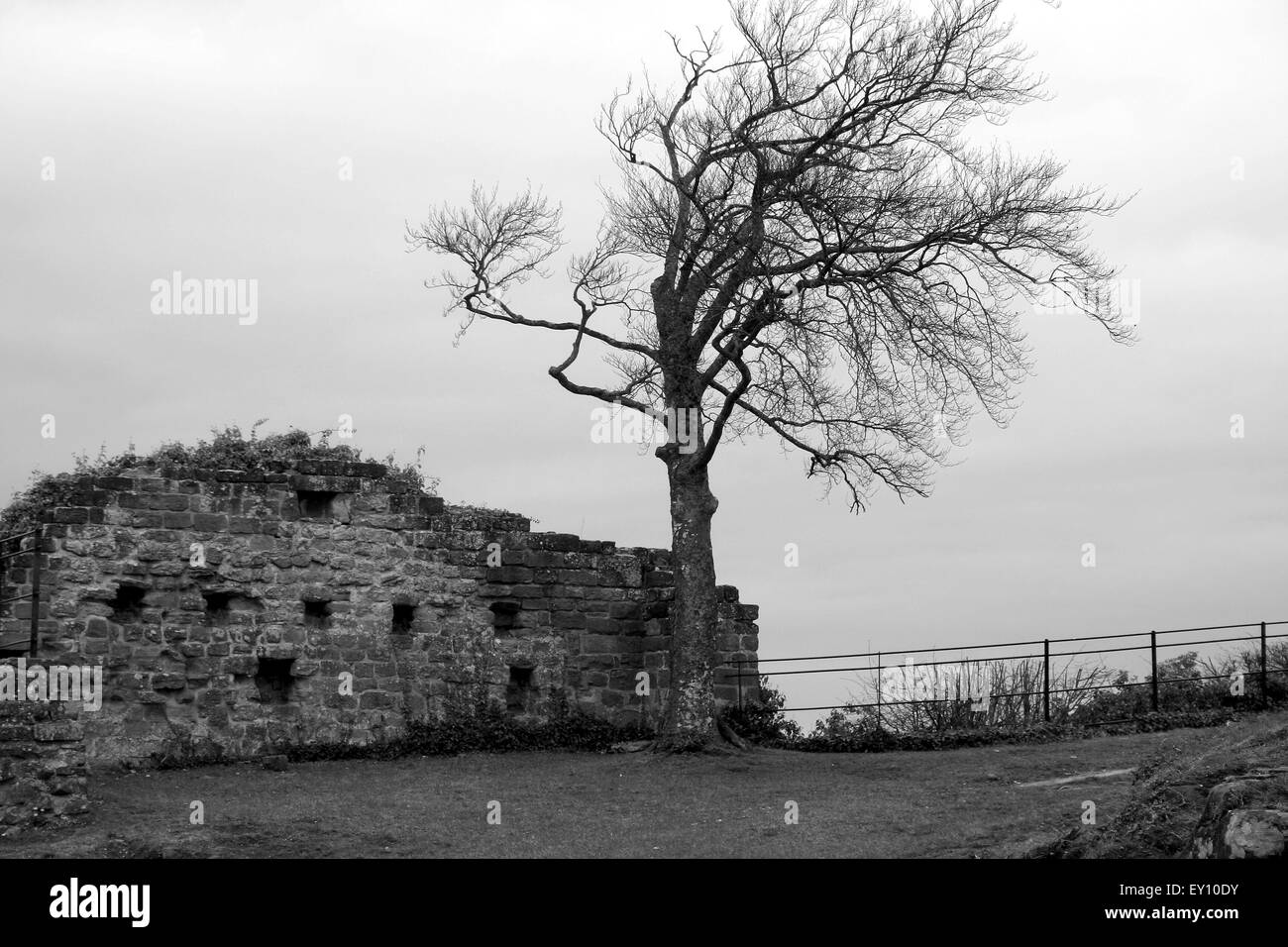 Ghostly tree by castle wall, Germany, black and white. - Stock Image