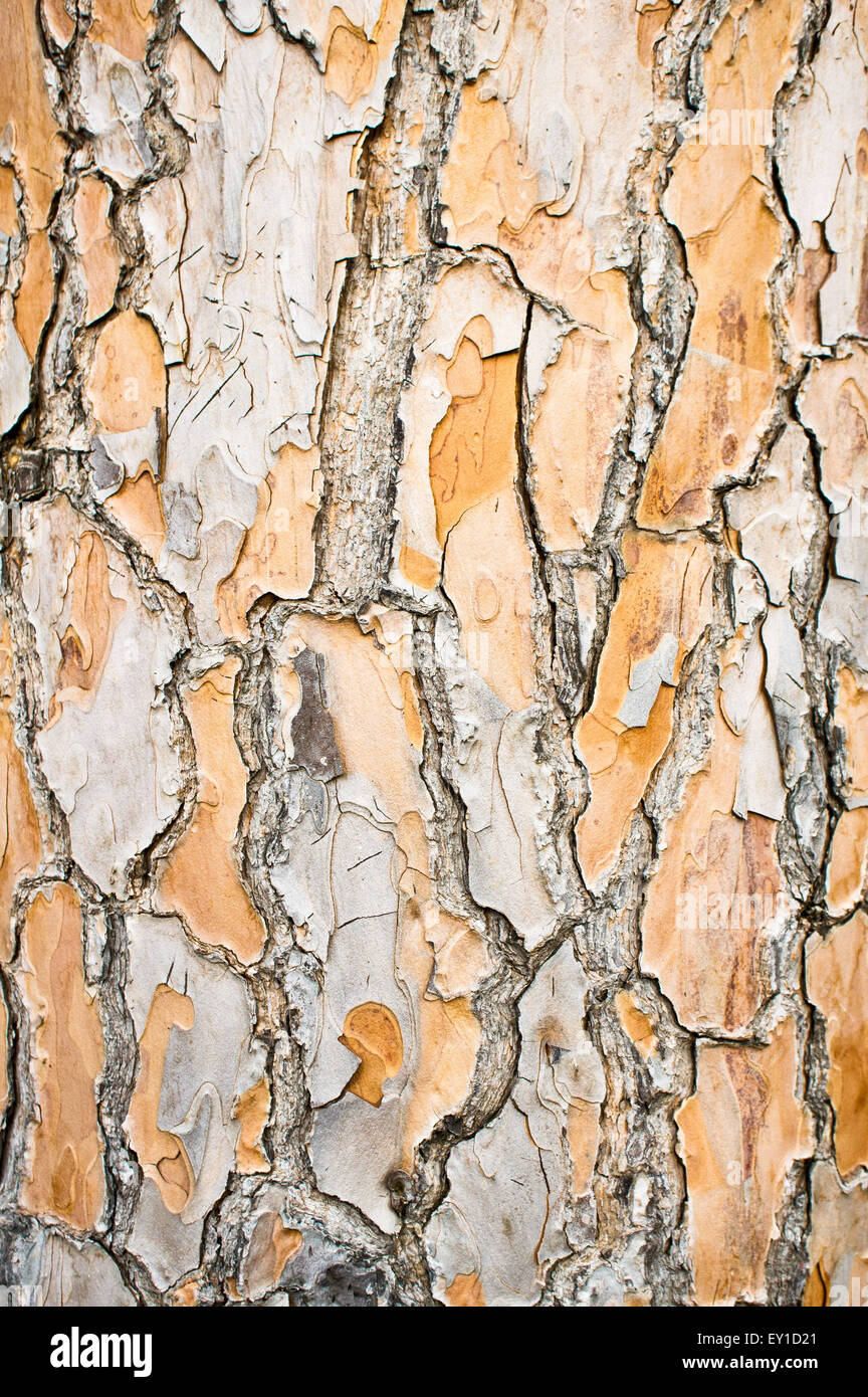 Part of an aged tree trunk as a background image Stock Photo