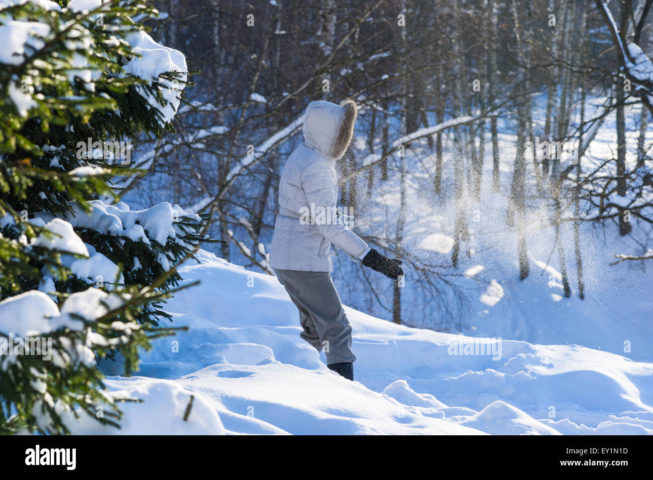 Unidentified, unrecognizable woman plays snowball fight in the winter forest. Snow powder in the air - Stock Image