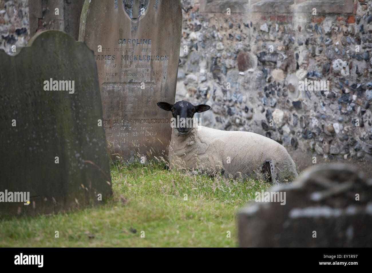 Grave Lamb Stock Photos & Grave Lamb Stock Images - Alamy