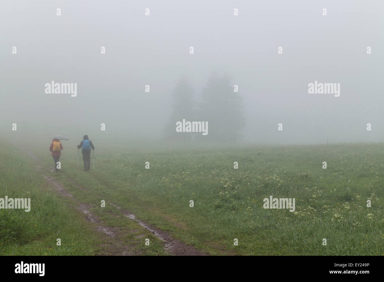 Hikers in foggy meadow - Stock Image