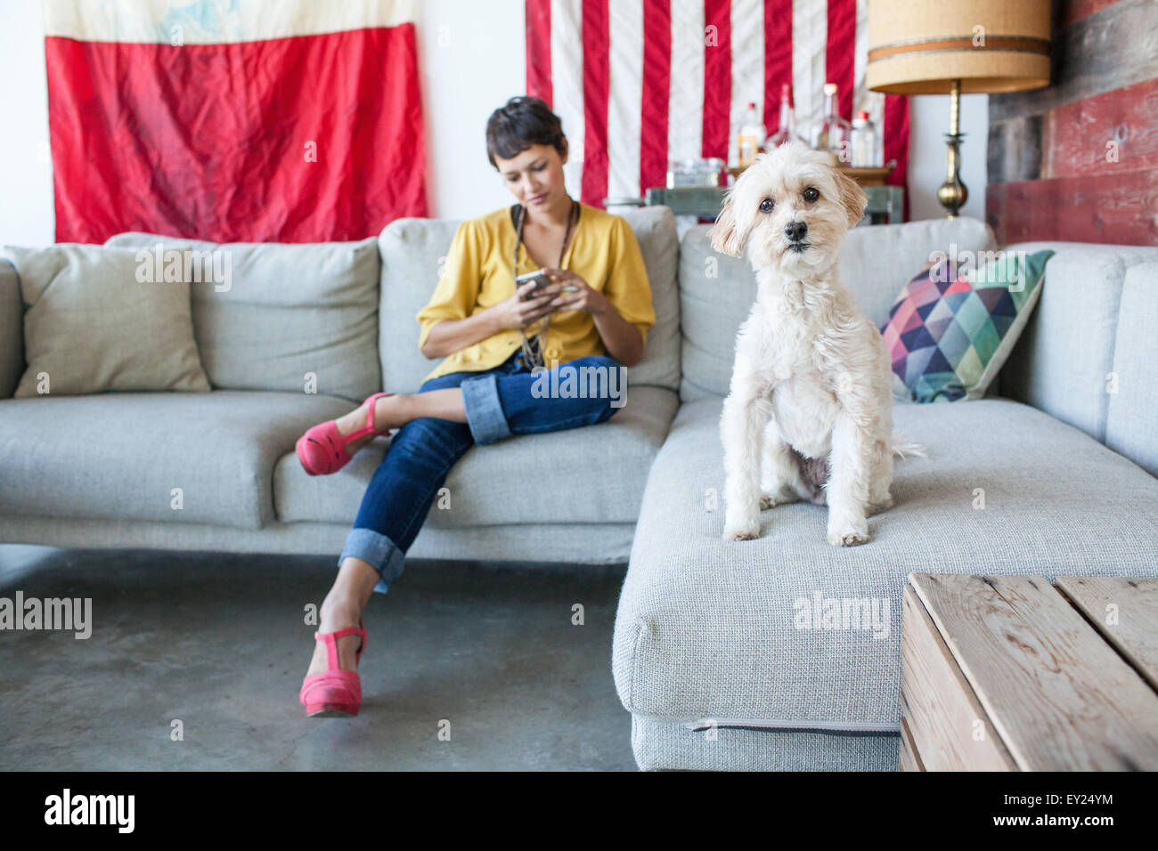 Portrait of young woman using smartphone and cute dog on living room sofa - Stock Image