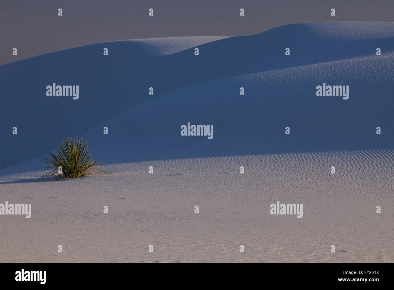 Blue shadows on dunes, White Sands, New Mexico, USA - Stock Image