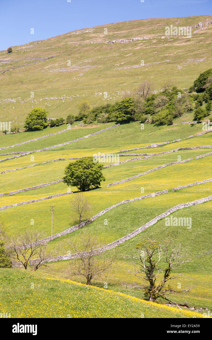 Farming field systems in Upper Wharfdale, Yorkshire Dales National Park, England, UK - Stock Image