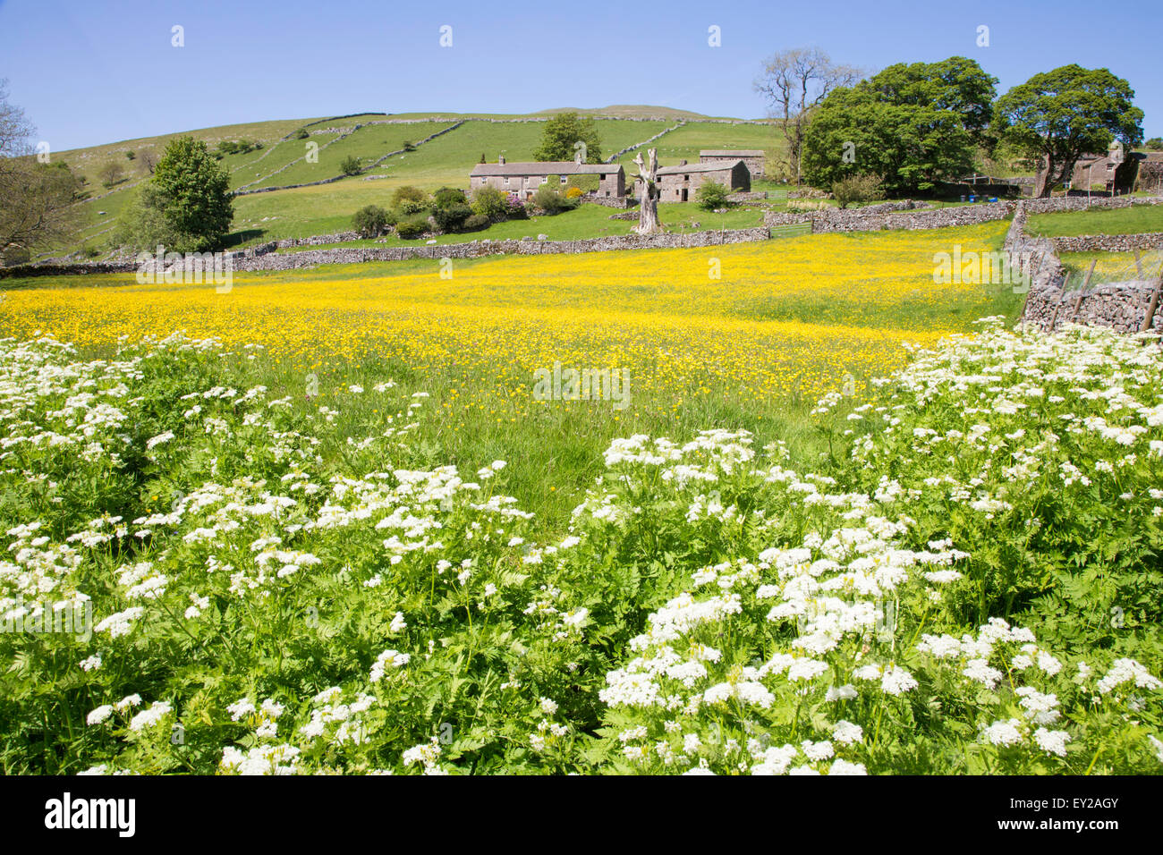 Traditional stone Dales farmhouse in Wharfdale, Yorkshire Dales National Park, North Yorkshire, England, UK - Stock Image