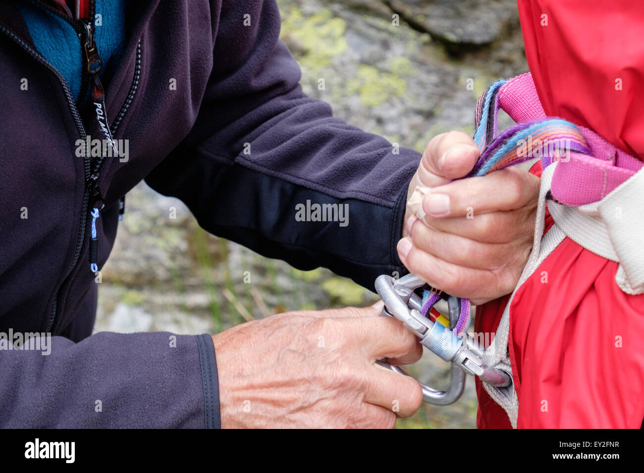 Climber teaching and helping a novice to fasten a climbing harness tying in with karabiners. Wales, UK, Britain - Stock Image
