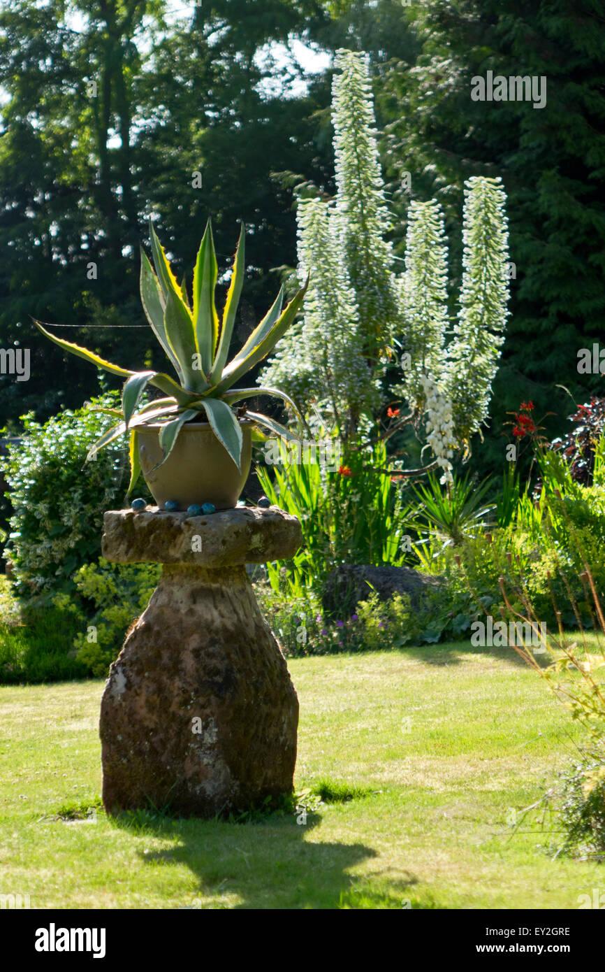 Aloe In Giardino aloe vera garden stock photos & aloe vera garden stock