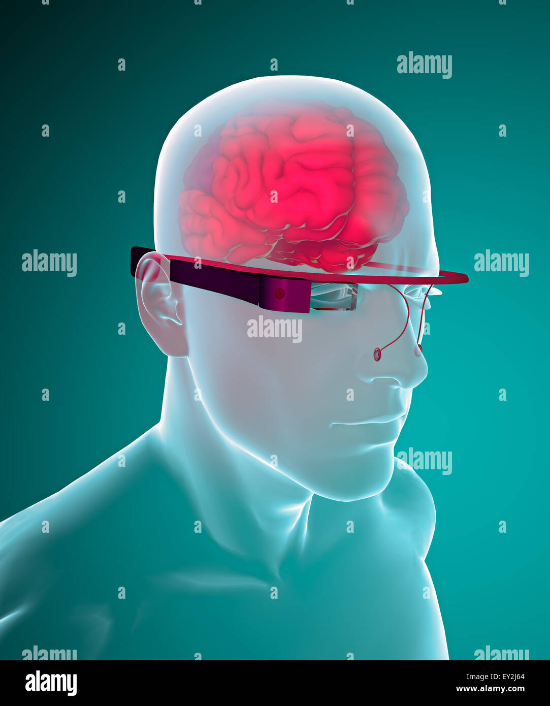 3d interactive glasses brain anatomy Stock Photo: 85495372 - Alamy